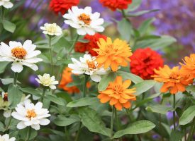 Как да имаме пъстра градина от ранна пролет до късна есен?
