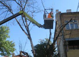 "Заради опасно дърво затвориха началото на бул. ""Александър Стамболийски"""