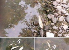 Експерти провериха сигнал за мъртва риба в река Стара