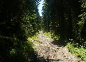 78- годишен мъж се изгуби в гората над Атолука, откриха го след ден