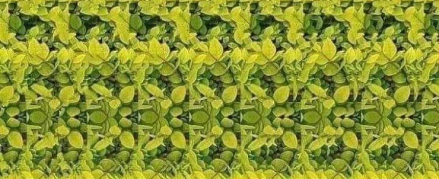 Проверете зрението си, какво виждате на картинката
