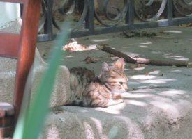 Котките – емблема на заведенията и други места