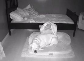 Дете бяга нощем от креватчето си, за да спи при кучето на пода