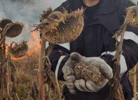 Внимавайте с незагасени фасове и огньове при ветровито време, освен треви горят и диви животни