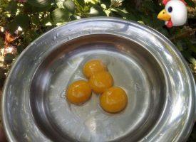Яйце с четири жълтъка снесе кокошка в Лесичово