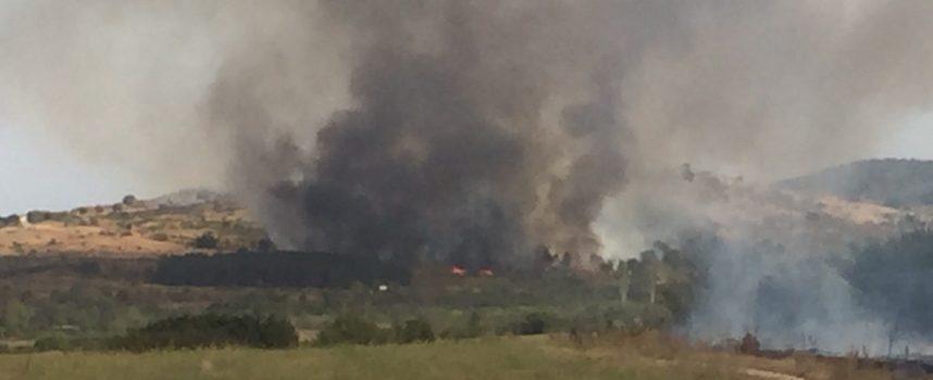 20 декара лозя са изгорели вчера край Карабунар, пожарите са били два