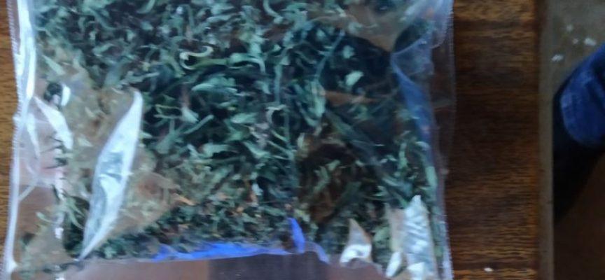 Спипаха наркопласьор, гледал канабис в центъра на Пазарджик