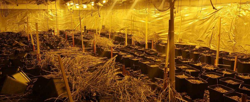 Лаборатория за марихуана разкриха в Звъничево