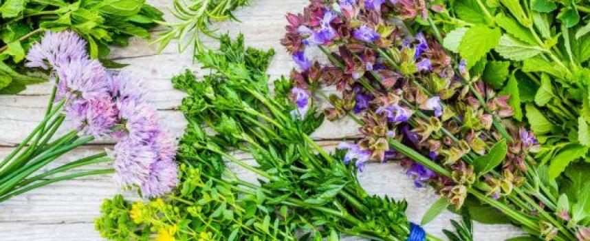 Утре е Еньовден – лечебните билки се берат преди изгрева на слънцето