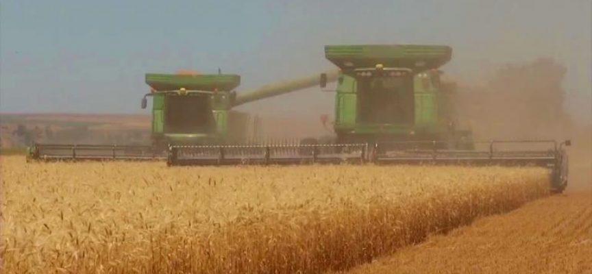 50 дка пшеница изгоряха край Динката