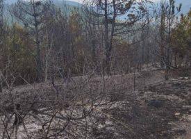 Спират пожара край Велинград с просека в гората