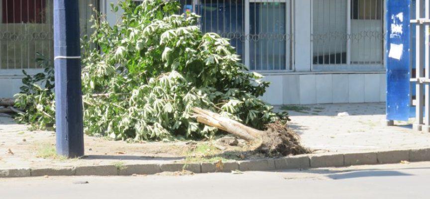 В Пазарджик и областта: Начинаещи шофьори бутат дървета и стълбове