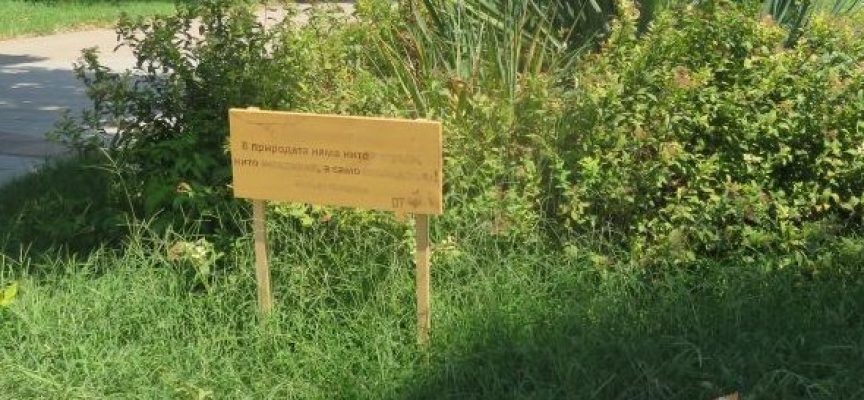 Семейство Нориеви от Пазарджик постави къщички за птици и закачливи надписи в парка пред Минералната баня