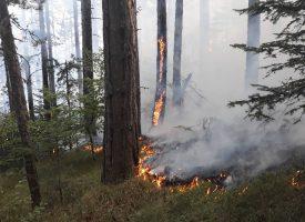 Над 350 горски служители с парична награда за участие в гасенето на пожари, вижте кои са те
